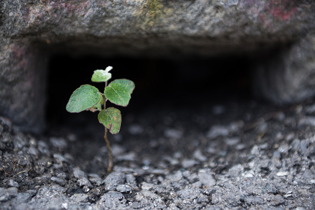 Parola d'ordine: resilienza